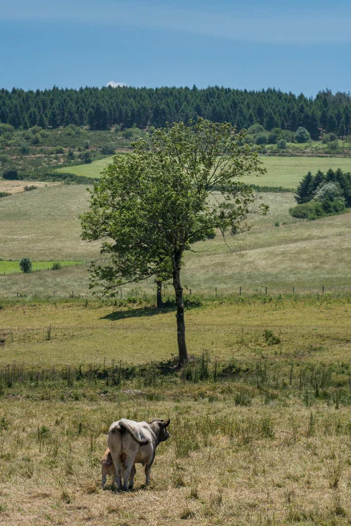 Montagne Noire, Cabardès – Juin 2015