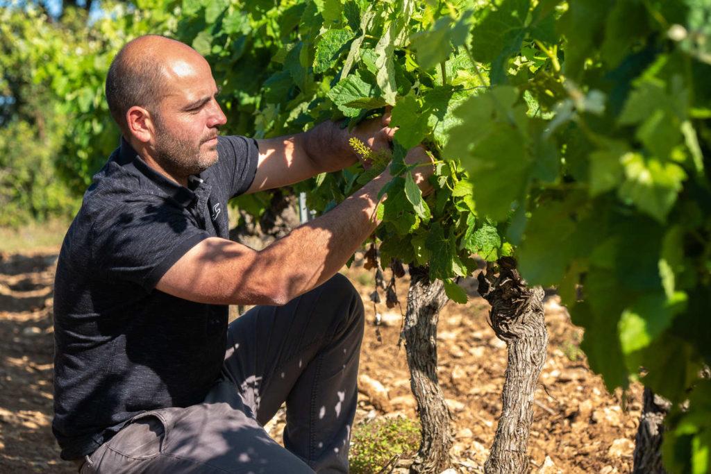 Domaine Galy - Travail à la vigne